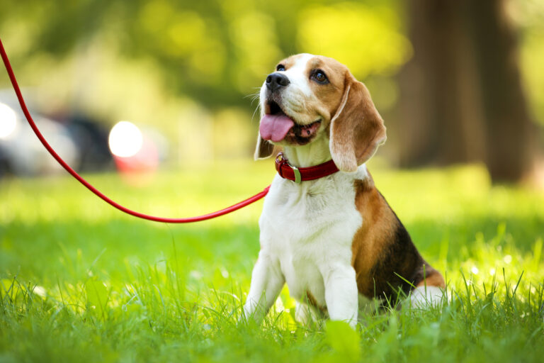 The 25 Most Unique Female Dog Names
