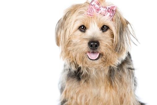 Turkish Female Dog Names