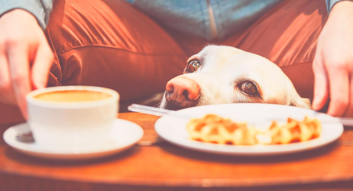 Can Dogs Drink Coffee ?