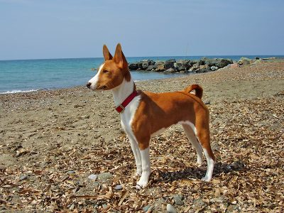 15 Male African Dog Names