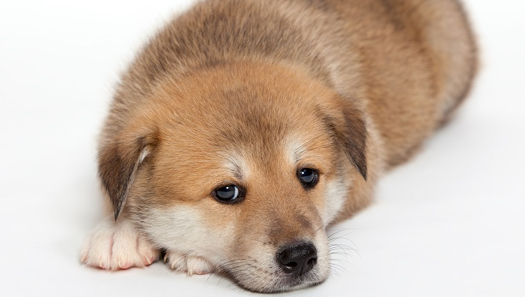 Huskita Dogs