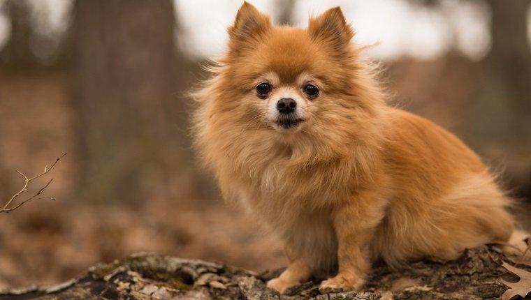 20 Cute Food Dog Names