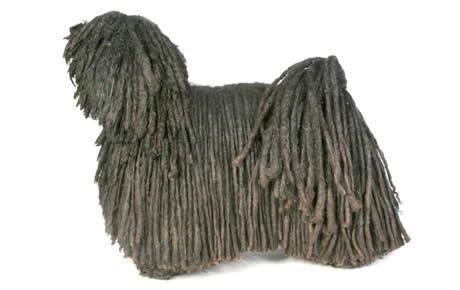 Puli Dogs