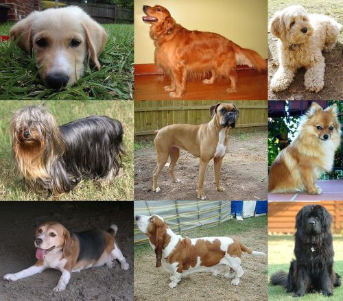What country has the most dogs?