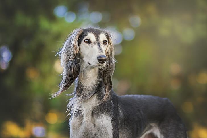 35 Elegant Male Dog Names
