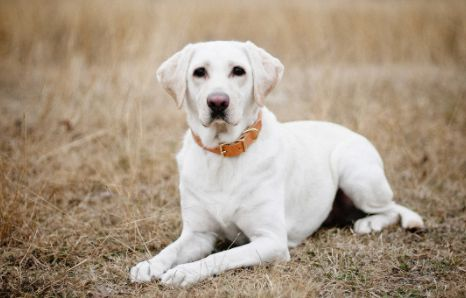 female-country-dog-names