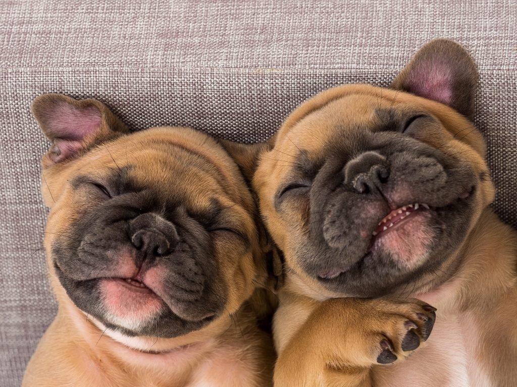 25 Funny Dog Names