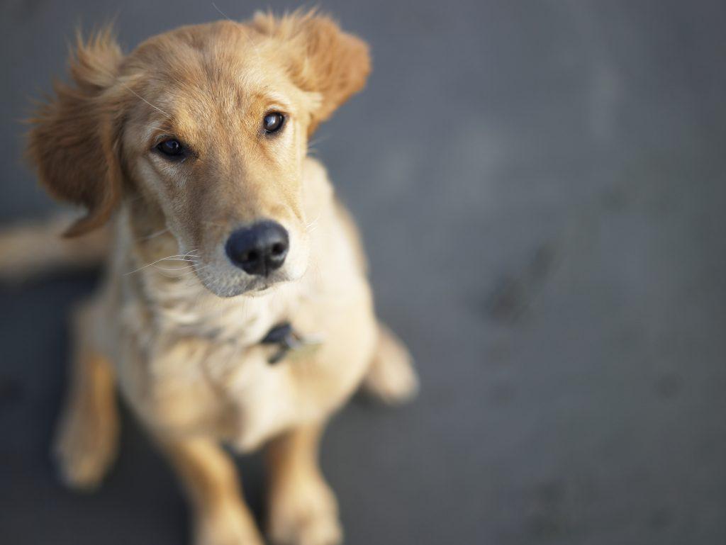 35 Elegant Female Dog Names