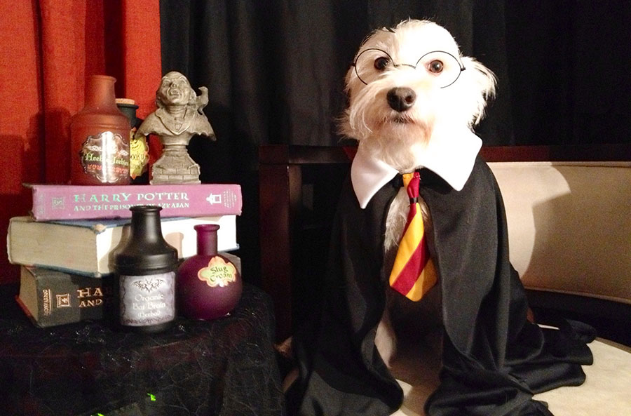 The 20 Best Harry Potter Dog Names