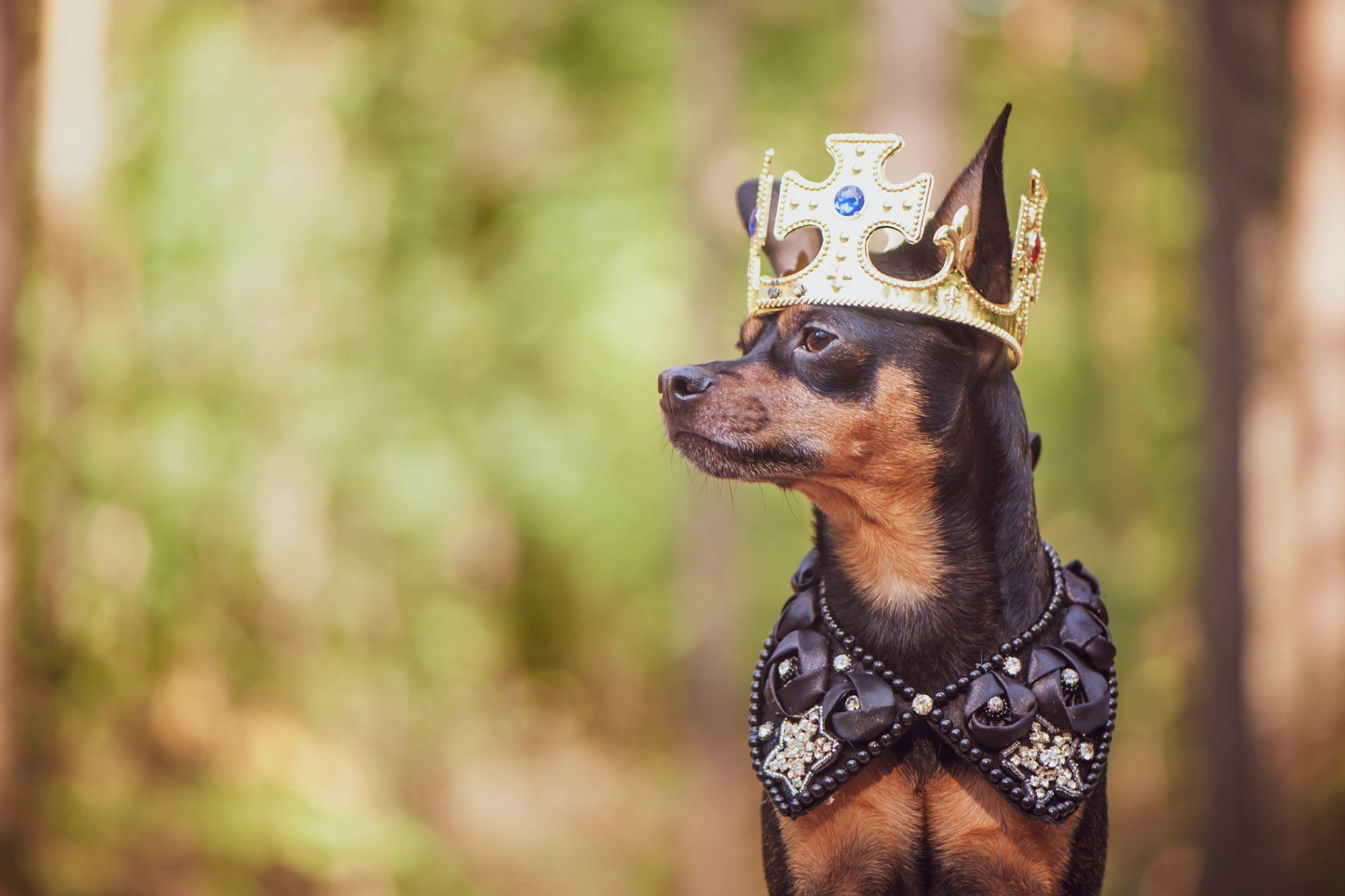 20 Royal Dog Names