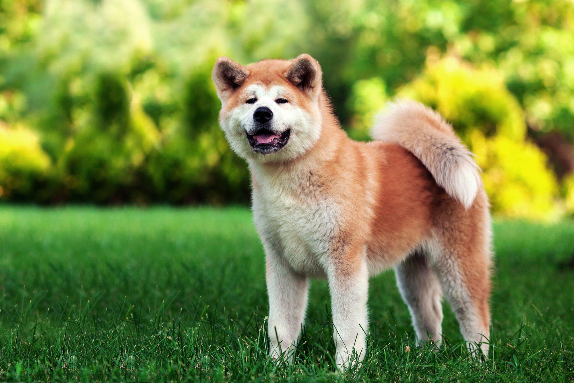 20 Japanese Dog Names
