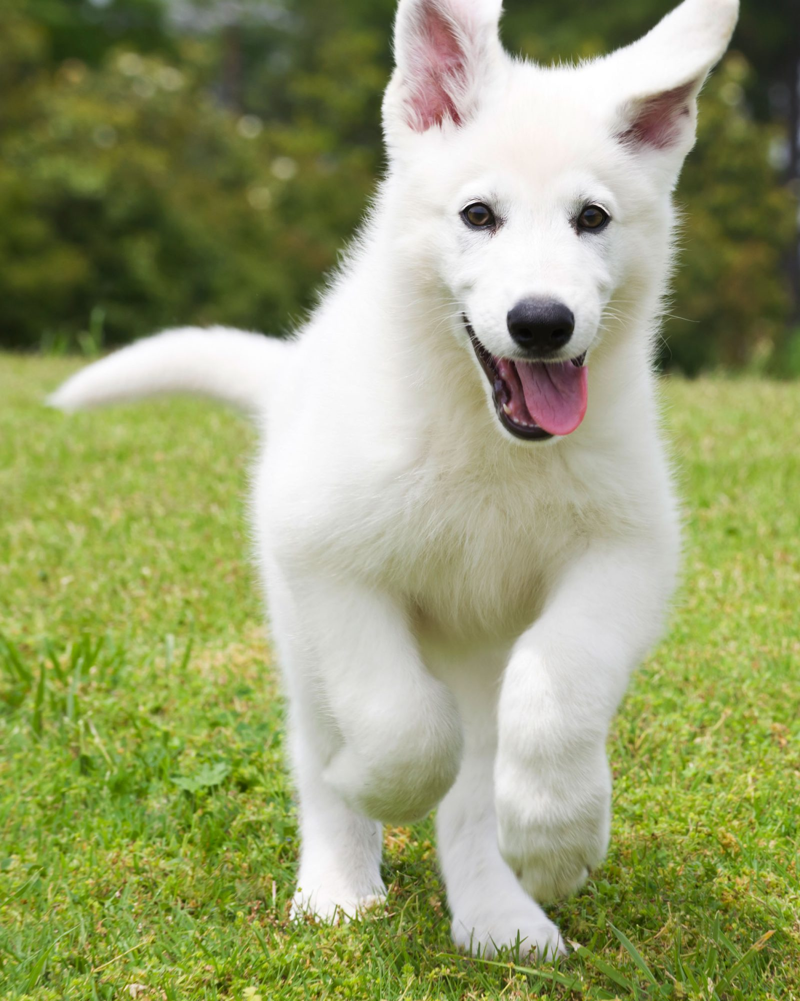 The Best 20 Dog Names for Your White Pup
