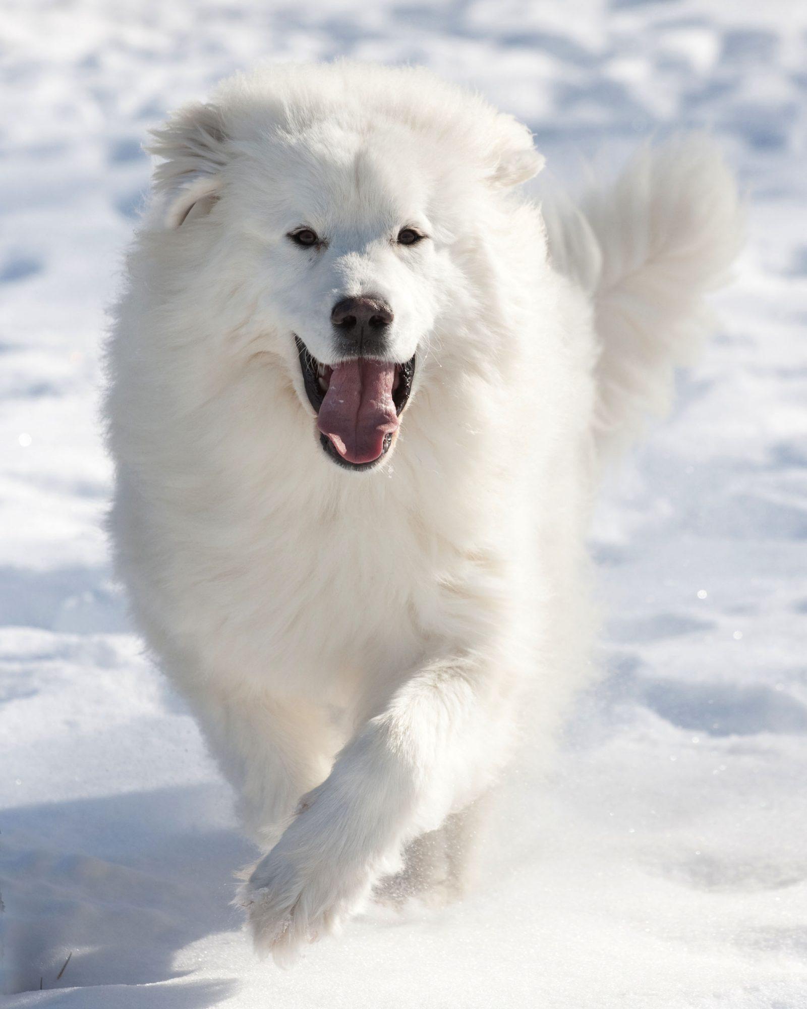 15 White Dog Names
