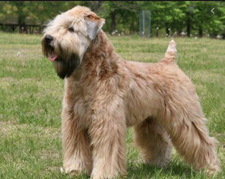 25 Irish Dog Names