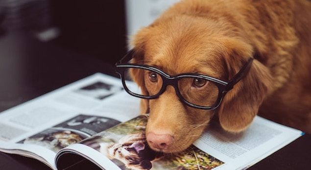20 Literary Dog Names