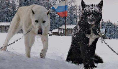 Russian Boy Dog Names