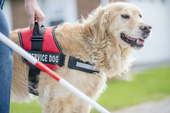 Service Dogs and Assistance Dogs