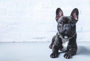 small dog names black